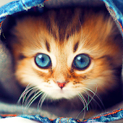 Cute Cats Live Wallpaper 4.1