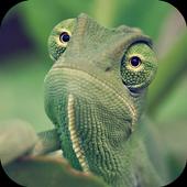 Chameleon Wallpapers HD 5.0.0