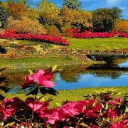 com.dakshapps.redflowerspark 2