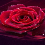 Red Rose Shine LWP 2
