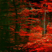 Red Tree Live Wallpaper 2