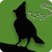 Bird's Songs 1.7.6