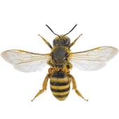 Bee simulator 1.29