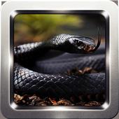Black Mamba Snake Wallpapers 2.2