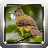 Kicau Burung Cucak Jenggot 3.0.69
