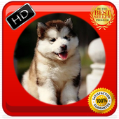 Cute Husky Photo Frames 1.0