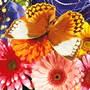 Butterfly Puzzle 2.0.15