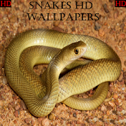 Snake Wallpapers HD 1.0