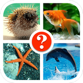 Fish Quiz 1.0.6