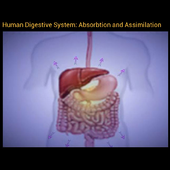 Absorbtion and Assimilation 1.0.0