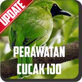 Perawatan Burung Cucak Ijo 1.1