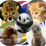 YAP Young Animal Pairs 1.0