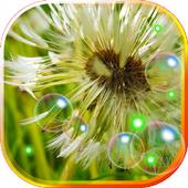 Dandelions live wallpaper 1.3