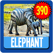 Elephant Wallpaper HD Complete 1.0