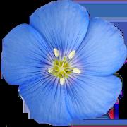 Colorado Rocky Mtn Wildflowers