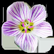 Flora of Virginia 1.61