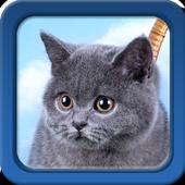 Kitten Live Wallpapers 1.5