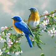70 Bird Sounds and Ringtones 1.2