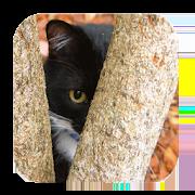 Find The Cat 1.0
