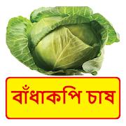 বাঁধাকপি চাষের সঠিক পদ্ধতি ~ Cabbage Cultivation 1.0