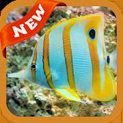 Fish Wallpaper 3.0