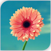 com.flower.girly.cute.rose.lily.orchid.wallpapers icon
