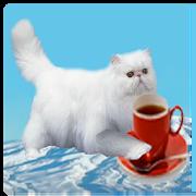 Flying Persian Cat 4.0