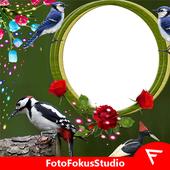 com.fotofokusstudio.woodpeckerinstadp icon