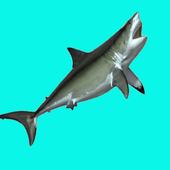 SHARK EATING SHARK-GAME FREE