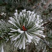 Winter Snow slide puzzles 1.0