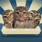 Owlcoaster 1.23