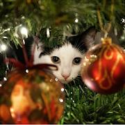 Advent Calendar Christmas Cats 1.3
