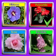 The Garden Quiz: Flowers 1.2