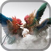 Rooster fight - Cookfighing 1.0