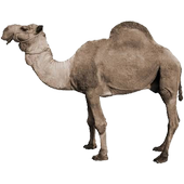 Desert StampedeGamePumpAction