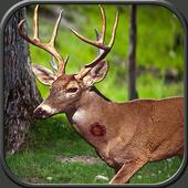 Jungle Animal Hunter 1.0