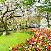 Beautiful Garden Wallpaper 1.0