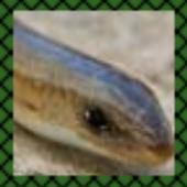 com.gen.snakedictionary 1.2
