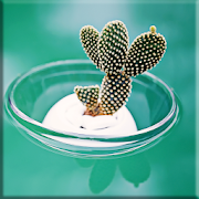 Cactus Lock Screen 1.0