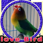 Masteran Lovebird Durasi Panjang MP3 1.0.0