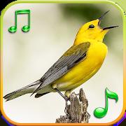 com.grs.birdsrts 1.2
