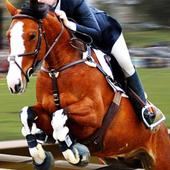 Horse Simulator 1.5