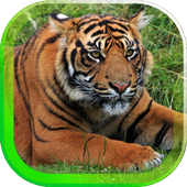 Tiger Best HD live wallpaper 1.0