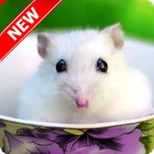 Hamster Wallpapers 2.2