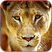 Wild Animal Wallpapers 1.2