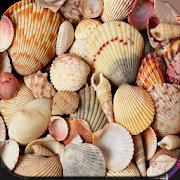 HD Seashell Wallpapers 1.01