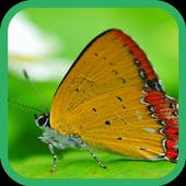 Butterfly Live Wallpaper 2.0