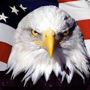 Eagle HD Wallpaper 1.01
