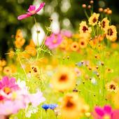 Spring Flowers Wallpaper 1.01