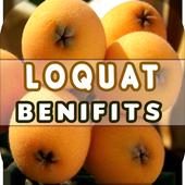 Loquat Benefits 2.1.2